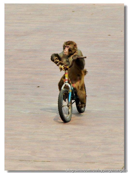 大兴榆垡那边的北京野生动物园自驾票一张多少钱,是按