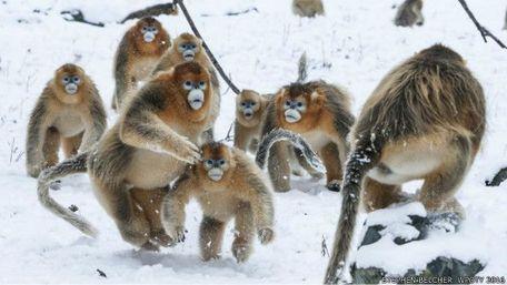 中国珍稀野生动物 中国野生保护动物