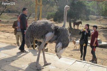 厦门海沧野生动物园将搬至翔安