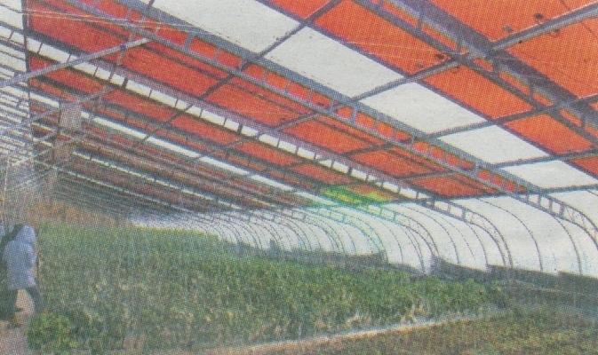 光伏蔬菜大棚发电系统目前已申报国家专利,试验成功后即可大范围推广