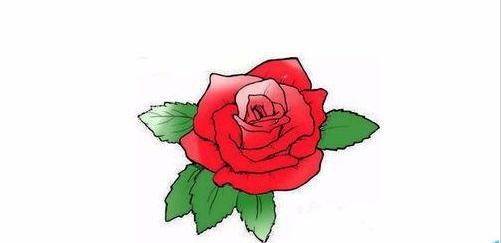 以上就是用photoshop给简笔画玫瑰花涂上颜色步骤介绍,是不是很漂亮啊