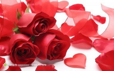 玫瑰花瓣揪了会长吗