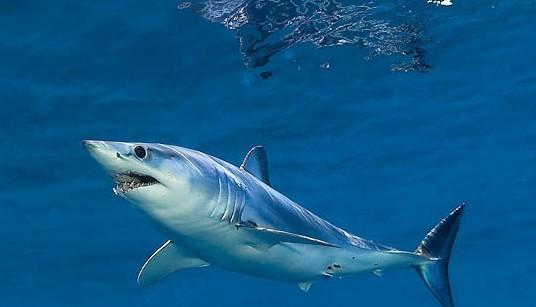 壁纸 动物 海洋动物 鱼 鱼类 桌面 536_307