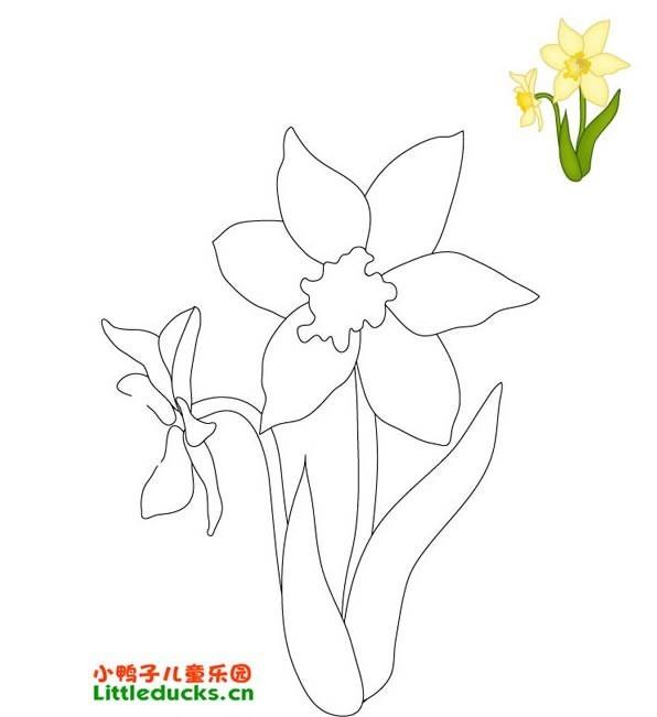 水仙花变化的图片简笔画