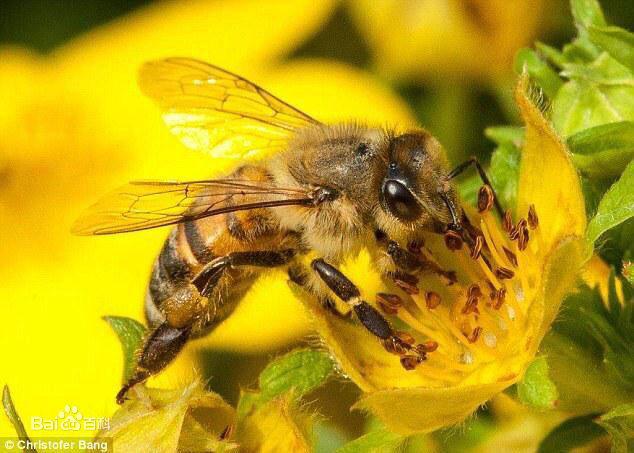 蜜蜂触角简笔画素材