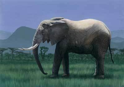世界陆地上最大的动物是谁呢?是非洲大象.