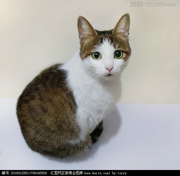猫是一种胎生动物.